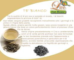 images tè bianco 1