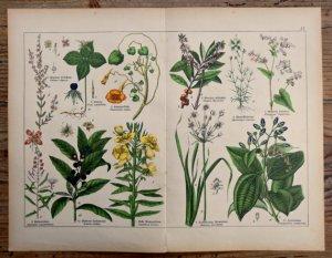 il_570xN.735641367_9z53 botanica