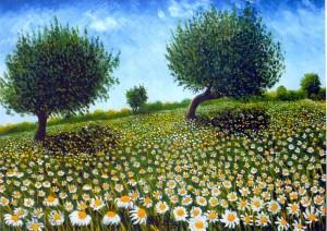 Campo-di-camomilla-con-piante-di-ulivo