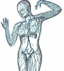 linfodrenaggio corpo 2